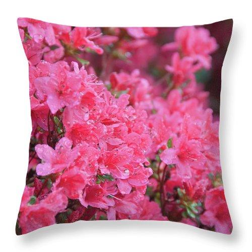 North Carolina Throw Pillow featuring the photograph Usa, North Carolina, Asheville, Azalea by Dkar Images