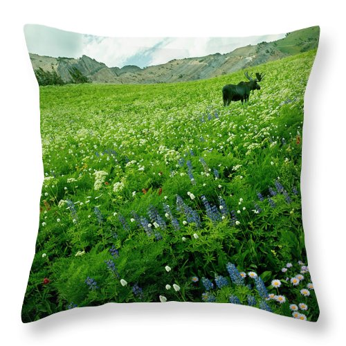 Non-urban Scene Throw Pillow featuring the photograph Usa, Utah, Wasatch National Forest, Mt by John Wang