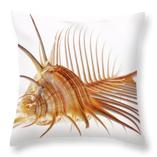 White Background Throw Pillow featuring the photograph Venus Comb Murex Shell by Martin Harvey