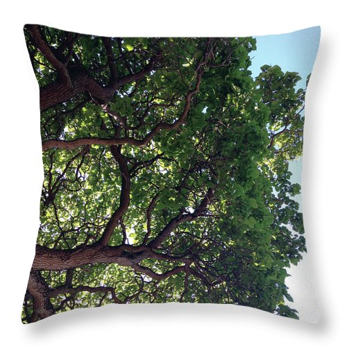 Photo Throw Pillow featuring the photograph Verdant Light by Vanessa MacKinnon