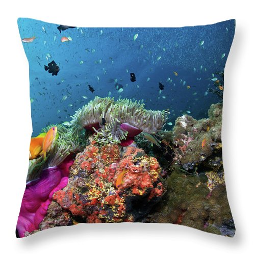 Underwater Throw Pillow featuring the photograph Vibrant Lives by Lea Lee