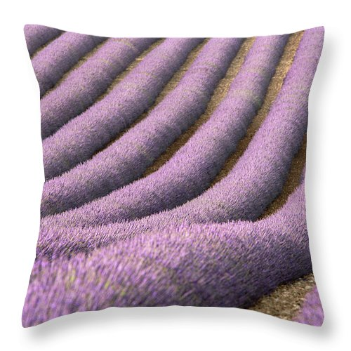 In A Row Throw Pillow featuring the photograph View Of Cultivated Lavender Field by Michele Berti