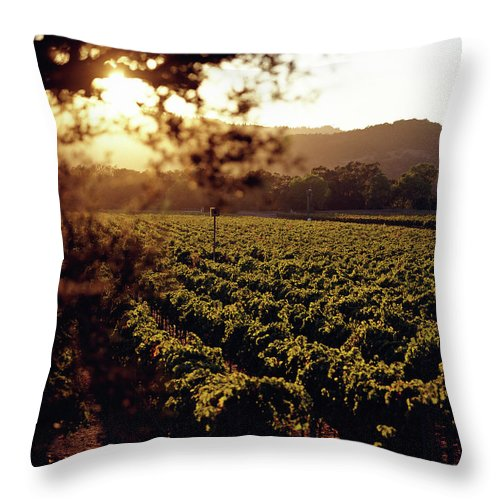Outdoors Throw Pillow featuring the photograph Vineyard, Napa Valley, California, Usa by Lisa Romerein