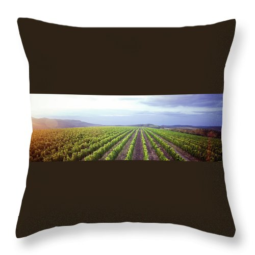 Scenics Throw Pillow featuring the photograph Vineyard Panorama Sunrise by Malhrovitz