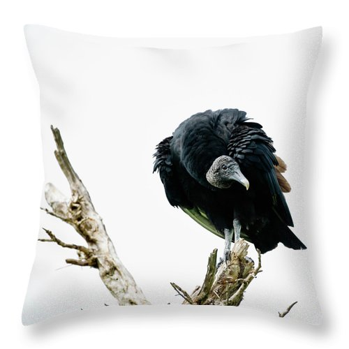 Animal Themes Throw Pillow featuring the photograph Vulture Perched On Tree by Roine Magnusson