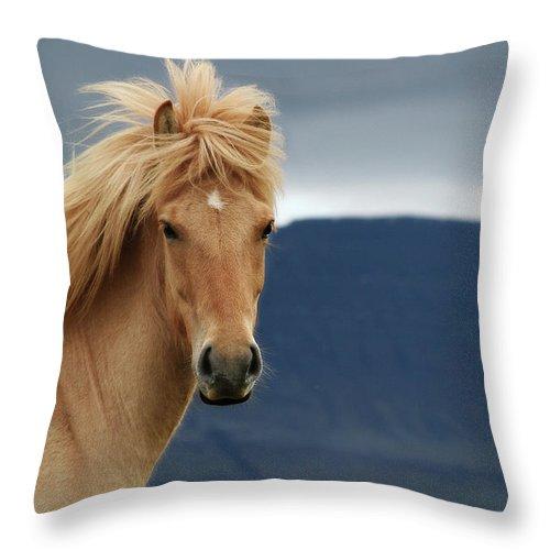 Horse Throw Pillow featuring the photograph Waiting For The Rain by Gigja Einarsdottir