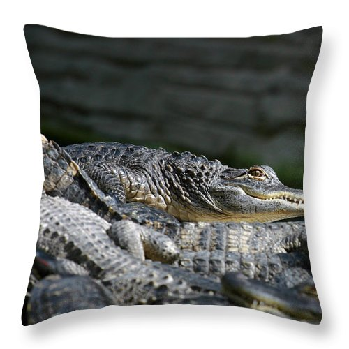 Alligator Throw Pillow featuring the photograph Watchfull Eye by Anthony Jones