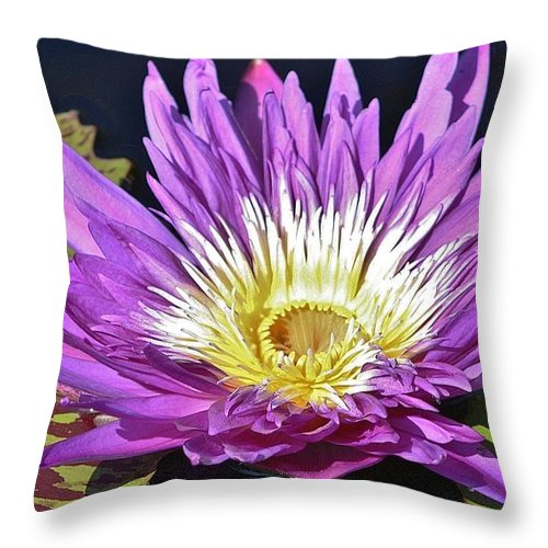 Nature Throw Pillow featuring the photograph Water Lily On The Pond by Bruce Bley