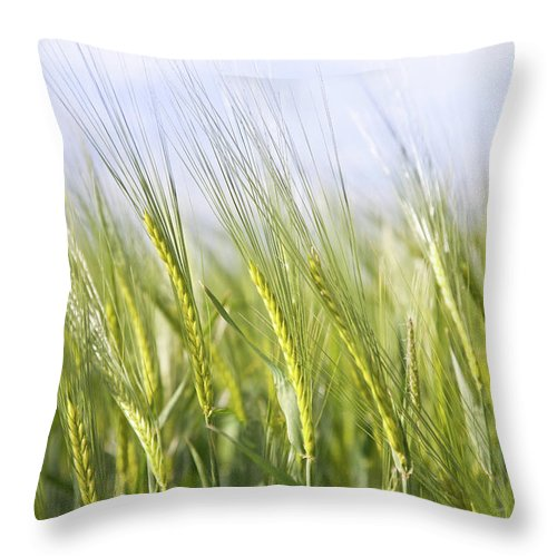 Scenics Throw Pillow featuring the photograph Wheat Field by Peter Chadwick Lrps