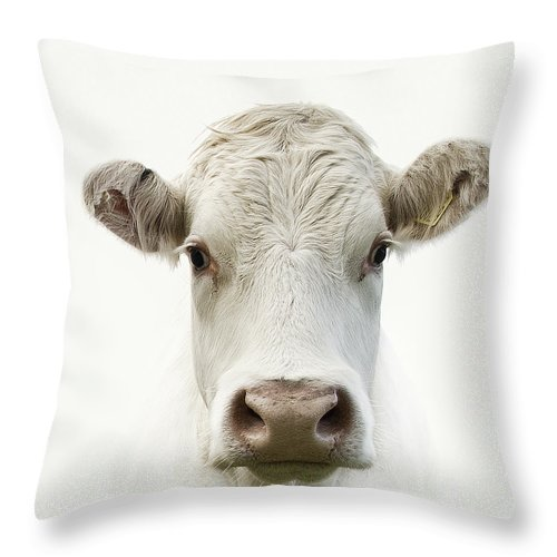 White Background Throw Pillow featuring the photograph White Cow by Jojo1 Photography