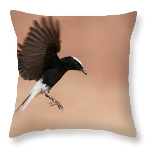 Eilat Throw Pillow featuring the photograph White Crowned Wheatear by Dorit Bar-zakay
