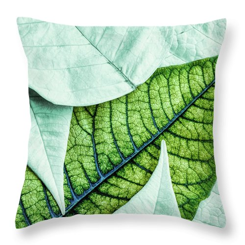 Pointsettia Throw Pillow featuring the photograph White Poinsetta Macro by Tom Mc Nemar