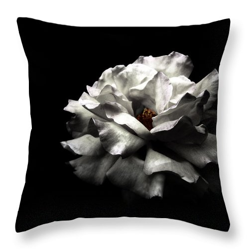 Black Background Throw Pillow featuring the photograph White Rose by Lola L. Falantes