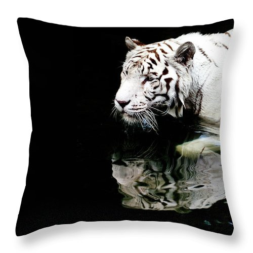 Three Quarter Length Throw Pillow featuring the photograph White Tiger In Water by Carlina Teteris
