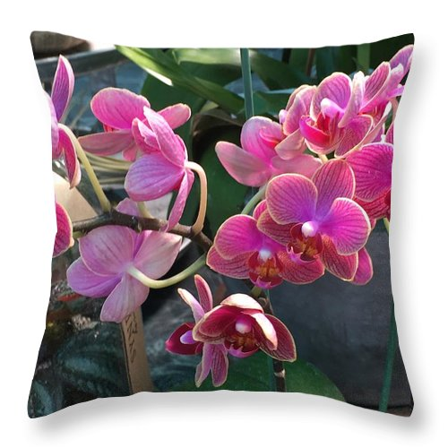 Throw Pillow featuring the photograph Why Now by Gewanda Parker