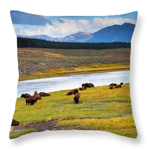Scenics Throw Pillow featuring the photograph Wild Bison Roam Free Beneath Mountains by Jamesbrey