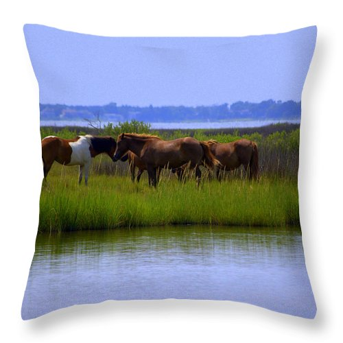 Horse Throw Pillow featuring the photograph Wild Horses Of Assateague Island by Robin Houde Photography
