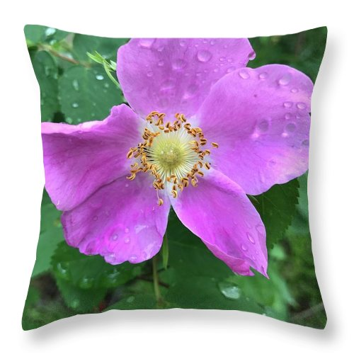 Wild Rose Throw Pillow featuring the photograph Wild Rose by Norman Burnham