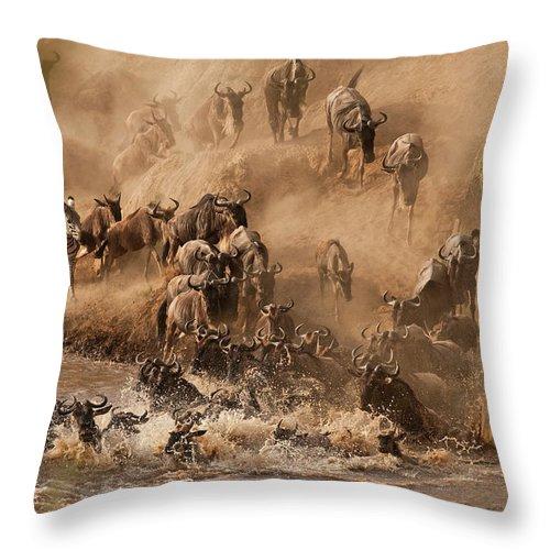 Horned Throw Pillow featuring the photograph Wildebeest And Zebra by Marsch1962uk