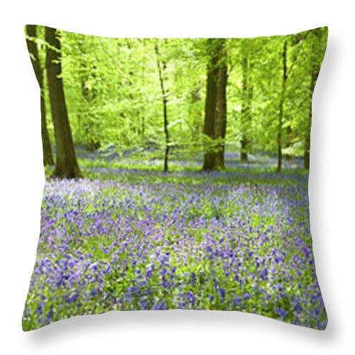 Scenics Throw Pillow featuring the photograph Wonderful Woodland by Pkfawcett