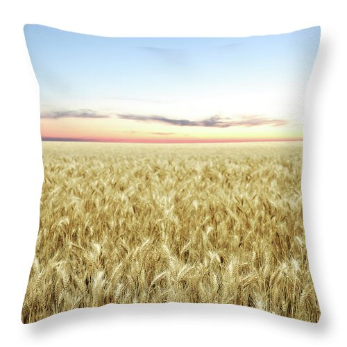 Scenics Throw Pillow featuring the photograph Xxl Wheat Field Twilight by Sharply done