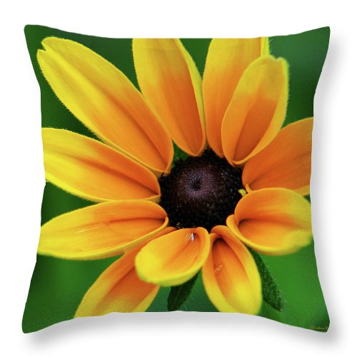 Yellow Flowers Throw Pillow featuring the photograph Yellow Flower Black Eyed Susan by Christina Rollo