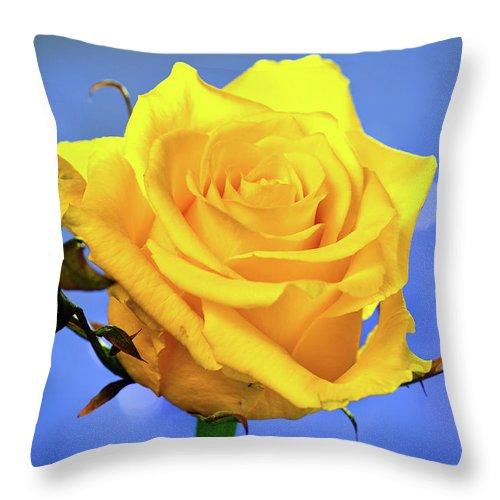 Slovenia Throw Pillow featuring the photograph Yellow Rose by © Karmen Smolnikar