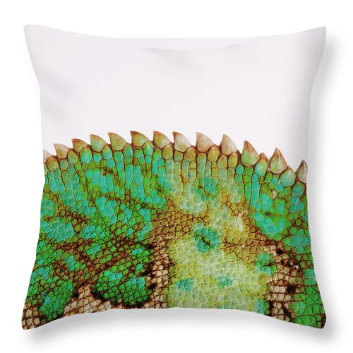 White Background Throw Pillow featuring the photograph Yemen Chameleon, Close-up Of Skin by Martin Harvey