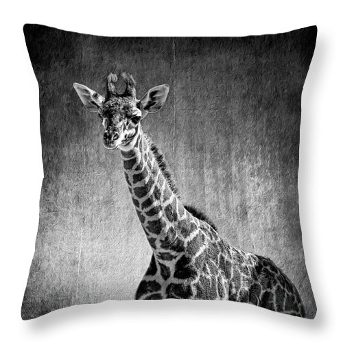 Giraffe Throw Pillow featuring the photograph Young Giraffe Black And White by Judy Vincent