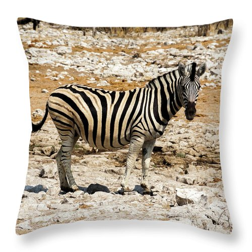 Animal Themes Throw Pillow featuring the photograph Zebra And White Rocks by Taken By Chrbhm