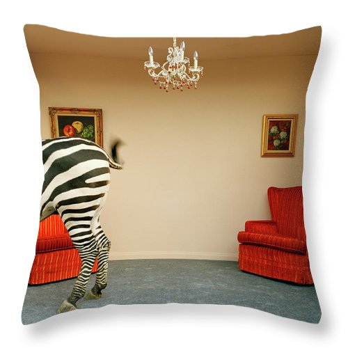 Out Of Context Throw Pillow featuring the photograph Zebra In Living Room Swishing Tail by Matthias Clamer