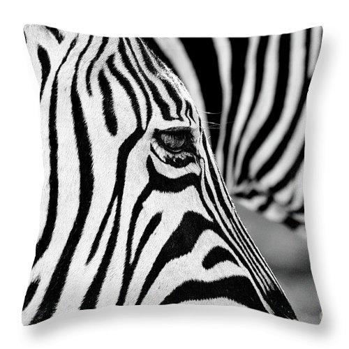 Animal Themes Throw Pillow featuring the photograph Zebra Stripes by Chris Kolaczan