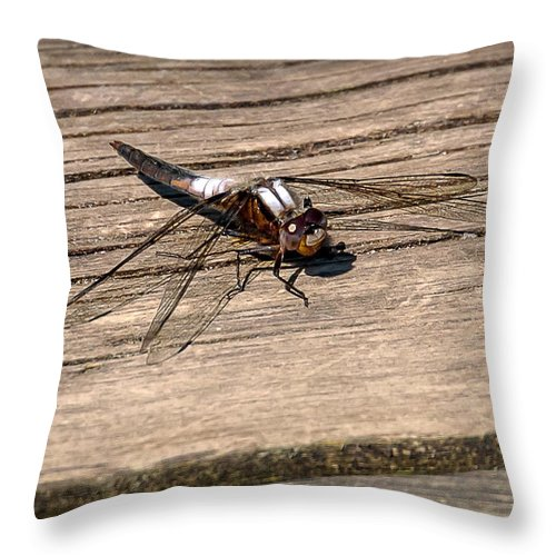 Insects Throw Pillow featuring the photograph 20-0609-0227 by Anthony Roma