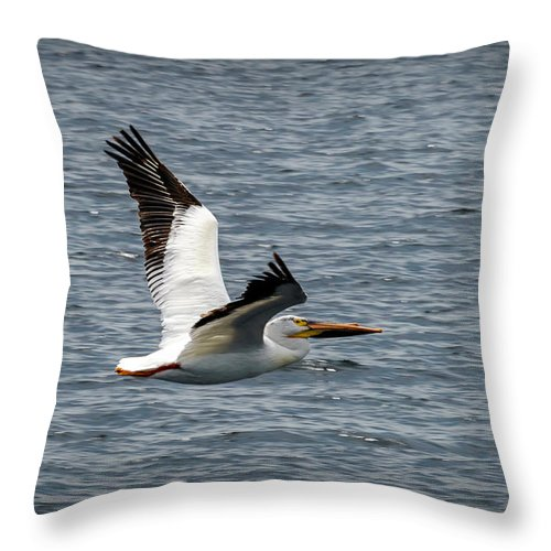 Bird Throw Pillow featuring the photograph 20-0609-0255 by Anthony Roma