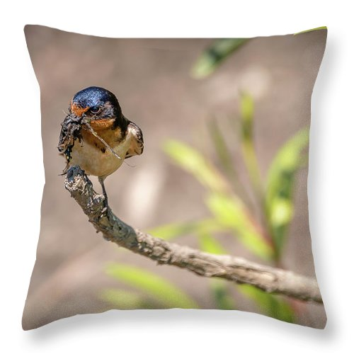 Bird Throw Pillow featuring the photograph 20-0616-0527 by Anthony Roma