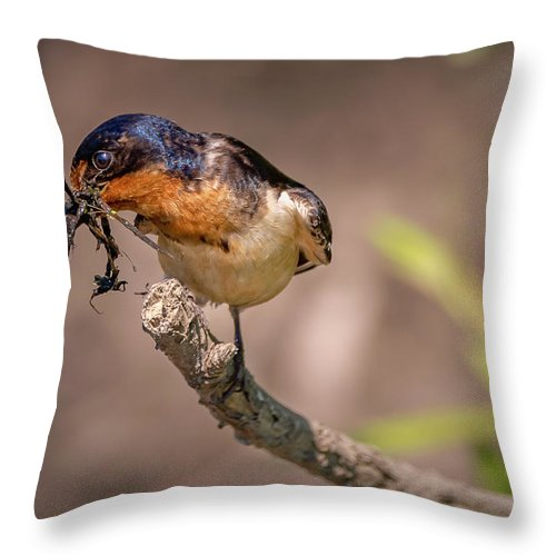Bird Throw Pillow featuring the photograph 20-0616-0531 by Anthony Roma
