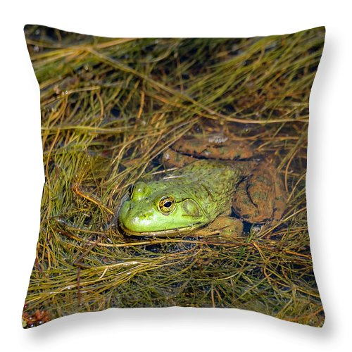 Animal Throw Pillow featuring the photograph 20-0616-0534 by Anthony Roma