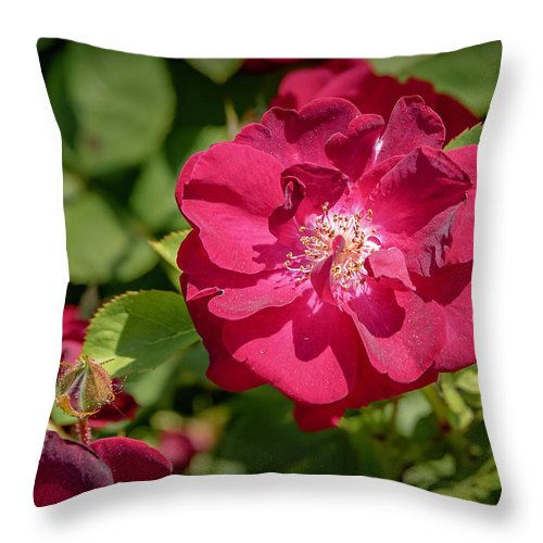 Flowers Throw Pillow featuring the photograph 20-0616-0551 by Anthony Roma