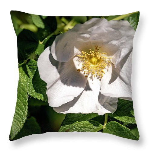 Flowers Throw Pillow featuring the photograph 20-0616-0552 by Anthony Roma