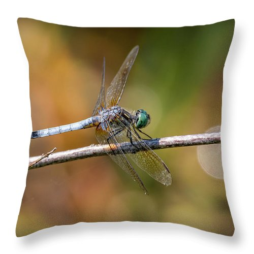 Insects Throw Pillow featuring the photograph 20-0616-0564 by Anthony Roma