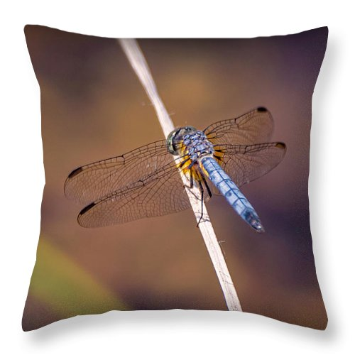 Insects Throw Pillow featuring the photograph 20-0616-0568 by Anthony Roma