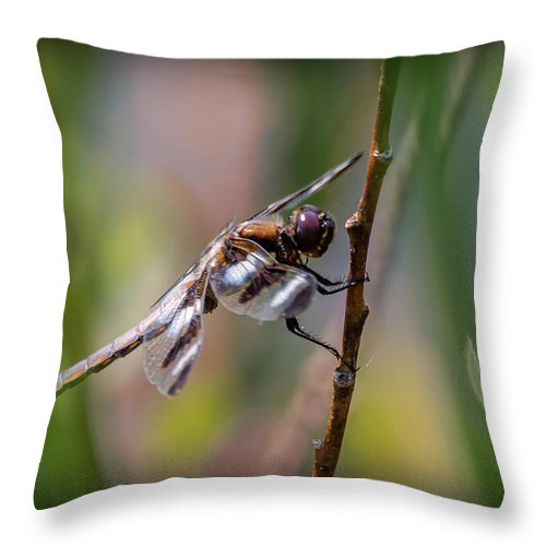 Insects Throw Pillow featuring the photograph 20-0616-0574 by Anthony Roma