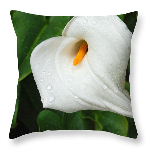 Calla Lily Throw Pillow featuring the photograph After the Rain by Suzanne Gaff