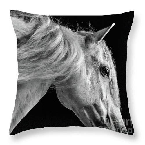 Horse Throw Pillow featuring the photograph Andalusian Motion by Shelley Paulson