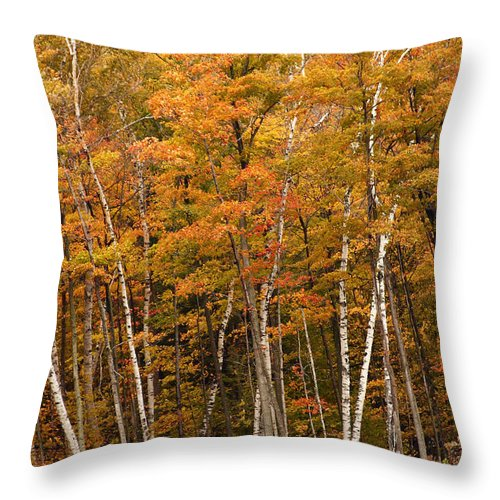 3scape Throw Pillow featuring the photograph Autumn Glory by Adam Romanowicz