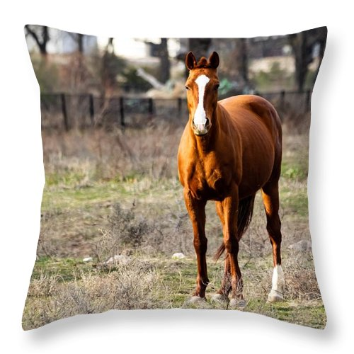 Horse Throw Pillow featuring the photograph Bay Horse 3 by C Winslow Shafer