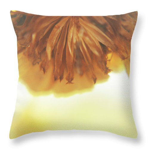 Nature Throw Pillow featuring the photograph Brown Flower by Holly Morris