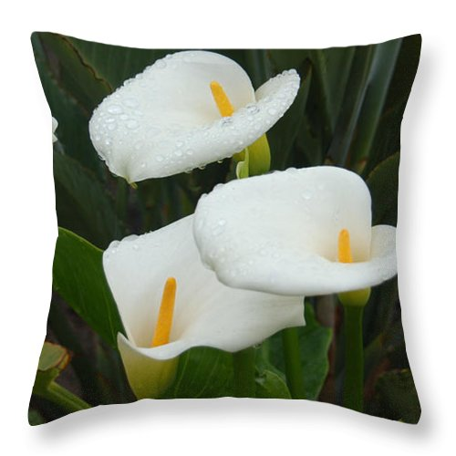 White Calla Lilies Throw Pillow featuring the photograph Calla Calypso by Suzanne Gaff