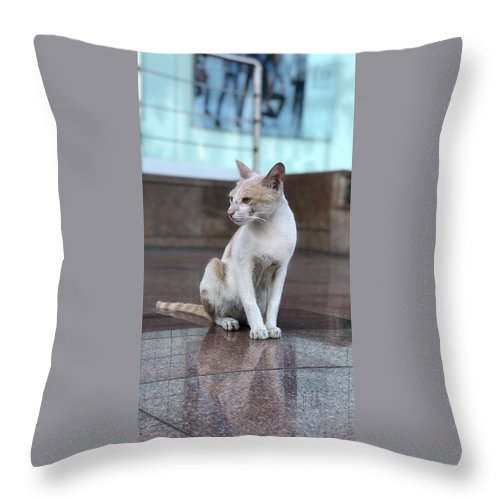 Wallpaper Throw Pillow featuring the photograph Cat Sitting On Marble Floor by Prashant Dalal