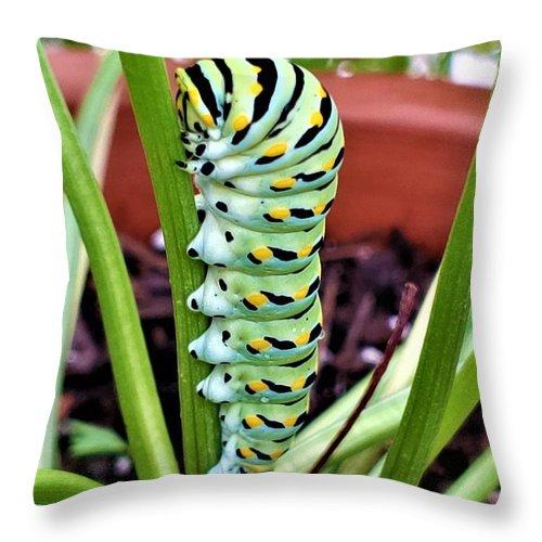 Caterpillar Throw Pillow featuring the photograph Caterpillar by Rob Hans